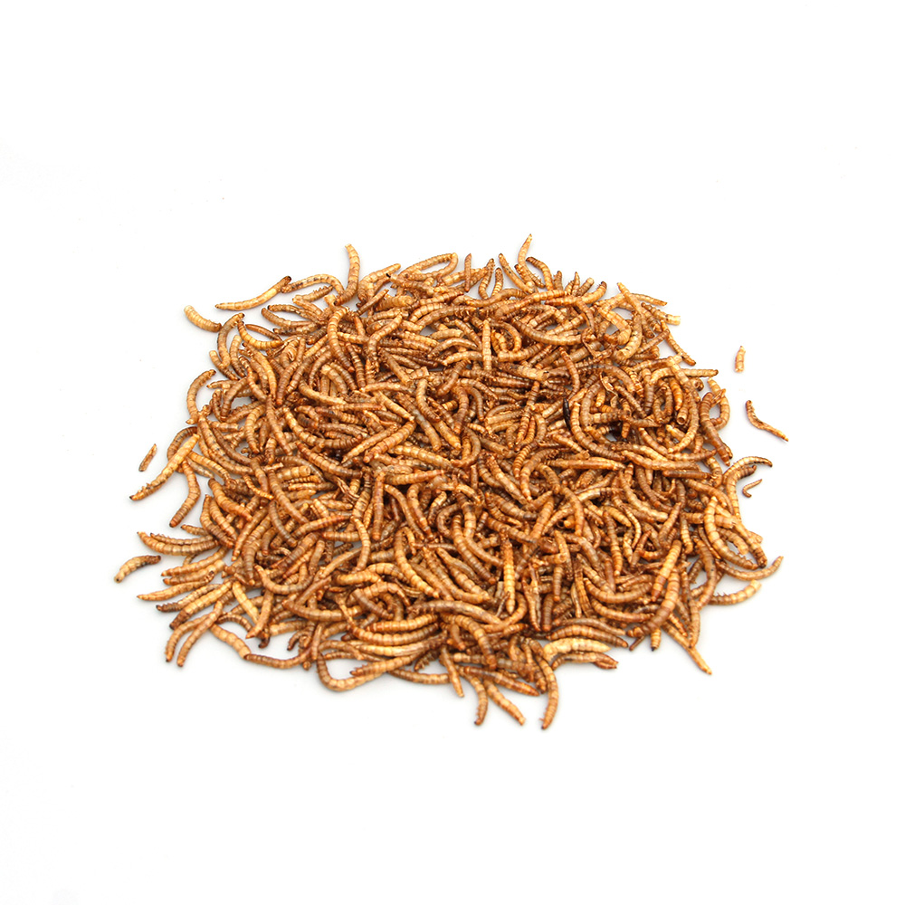 Goldfish and other pond fish feed mealworm First grade dried mealworm fish meal for sale