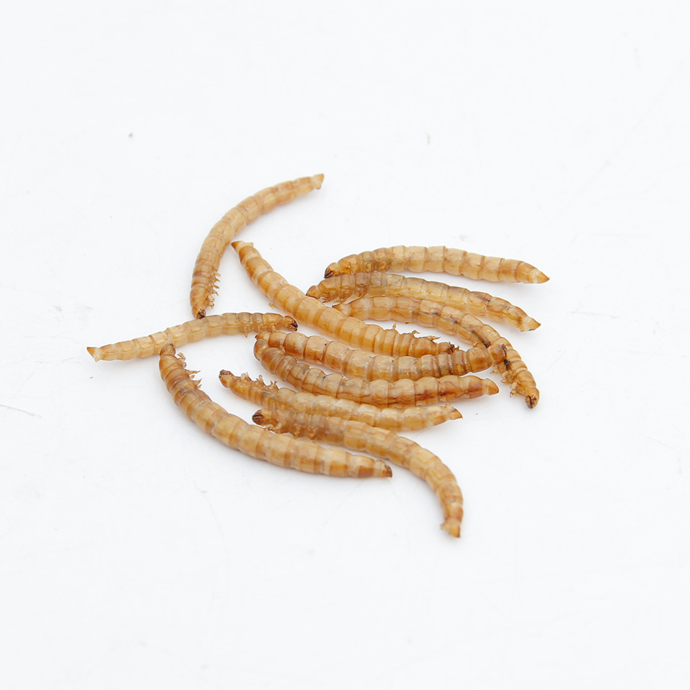 Microwave dried mealworms for bird food chickens reptiles fishes