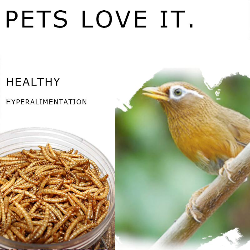 Boutique yellow mealworm professional supplier bird feed fish feed