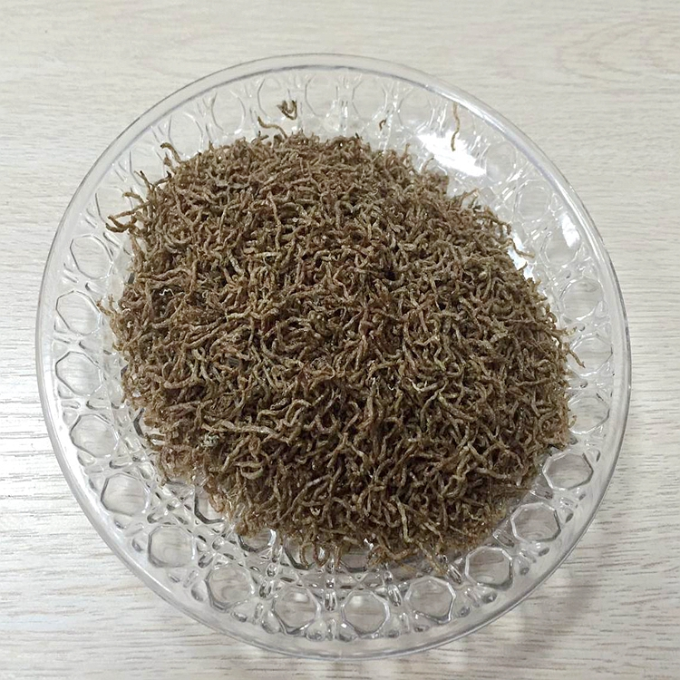 Organic Fish Feed for Fish Food Freeze Dried Bloodworms