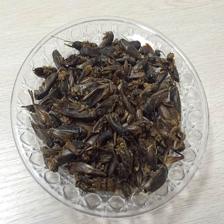 Microwave Dried Crickets For Pet Birds Food Manufacturer