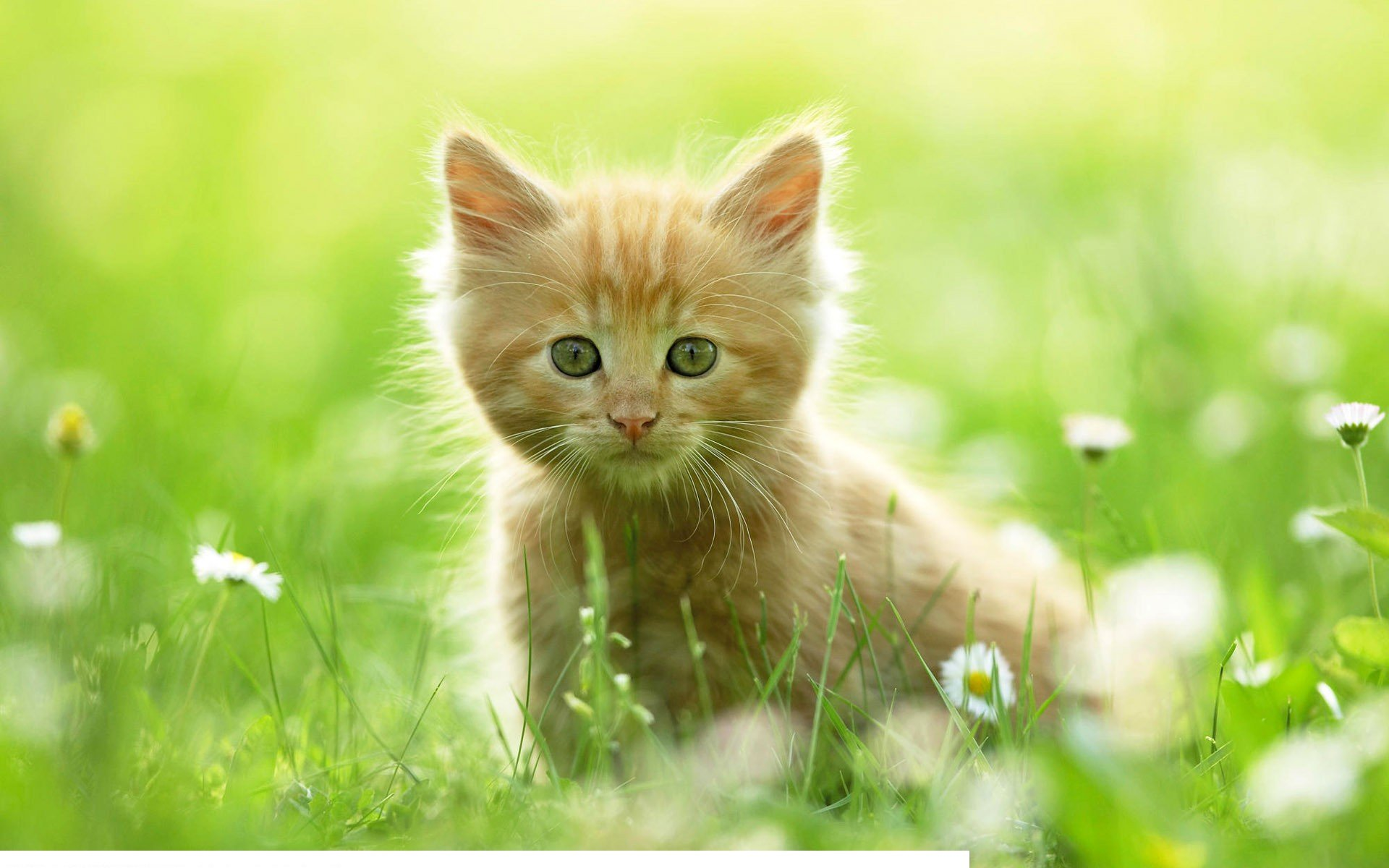 How to use a month to train kittens using cat litter?