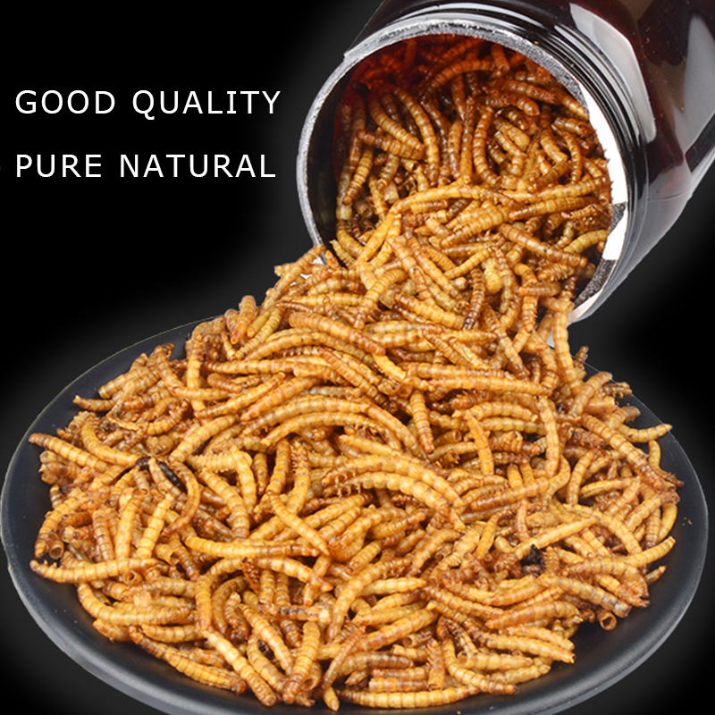 Mealworm treat for chicken wild birds and fish Dried mealworms