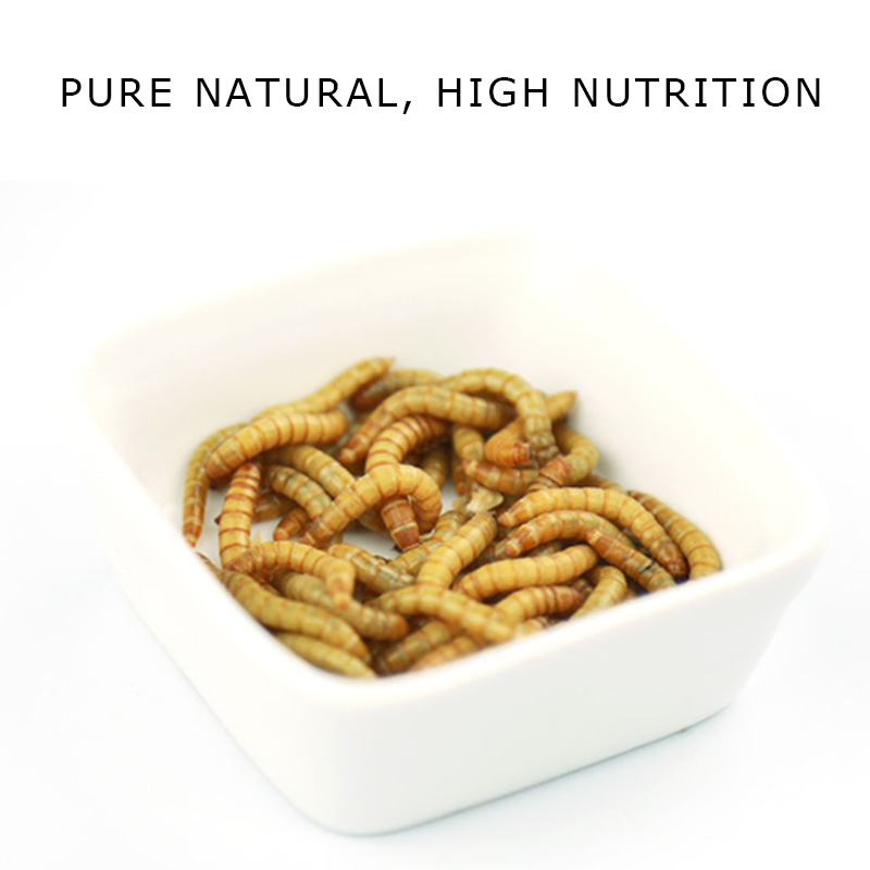 High Protein Dried Mealworms pet food fish food ANIMAL FEED bulk mealworm