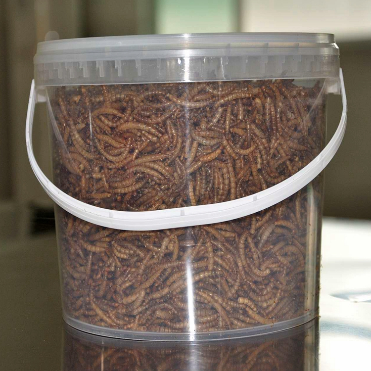 Dried Mealworm as Chicken Small Wholesale Bird Food