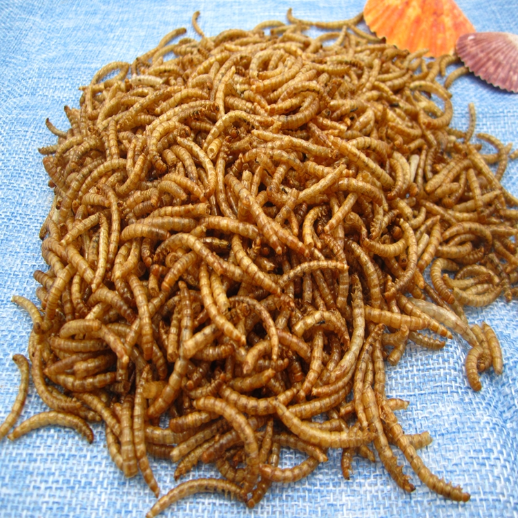 High Protein Mealworms Bird Food Mealworm Feed Pet Animals Food