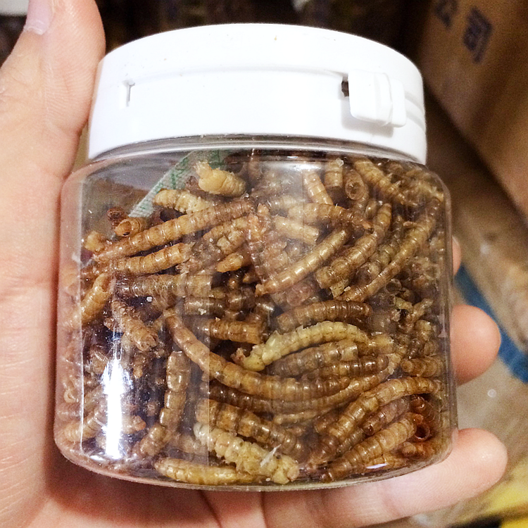 Dried Yellow Mealworm Pet Food Chicken Food Brid Food