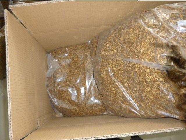 Supply Microwave Dried Mealworms for sale in UK