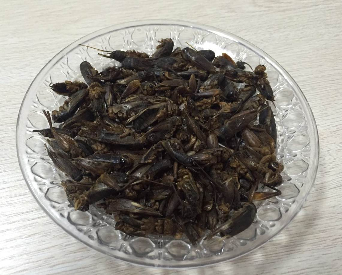 Dried  cricket   干蟋蟀 1.jpg