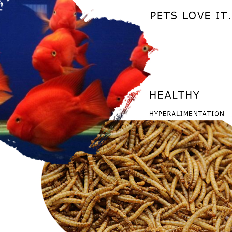 Microwave Dried Mealworms For SaleWild Bird Food supplier.jpg