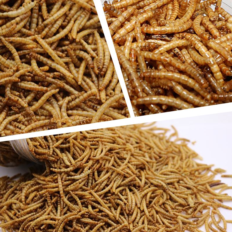 Microwave Dried Mealworms.jpg