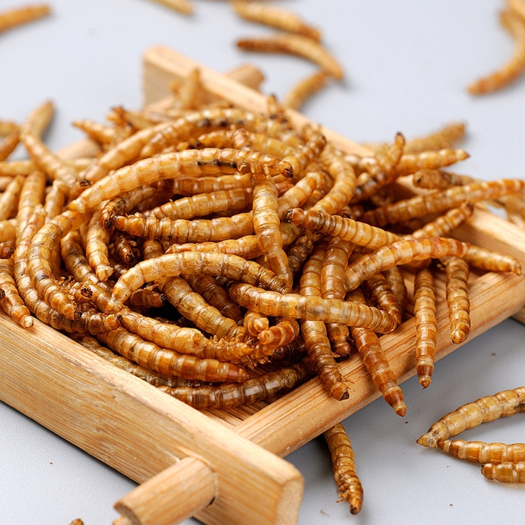 Mealworm treat for wild birds and fish Dried mealworms