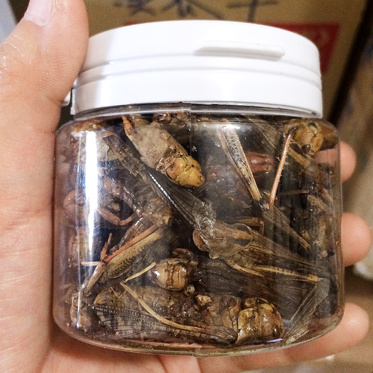 Top Quality Dried Locust for bird food