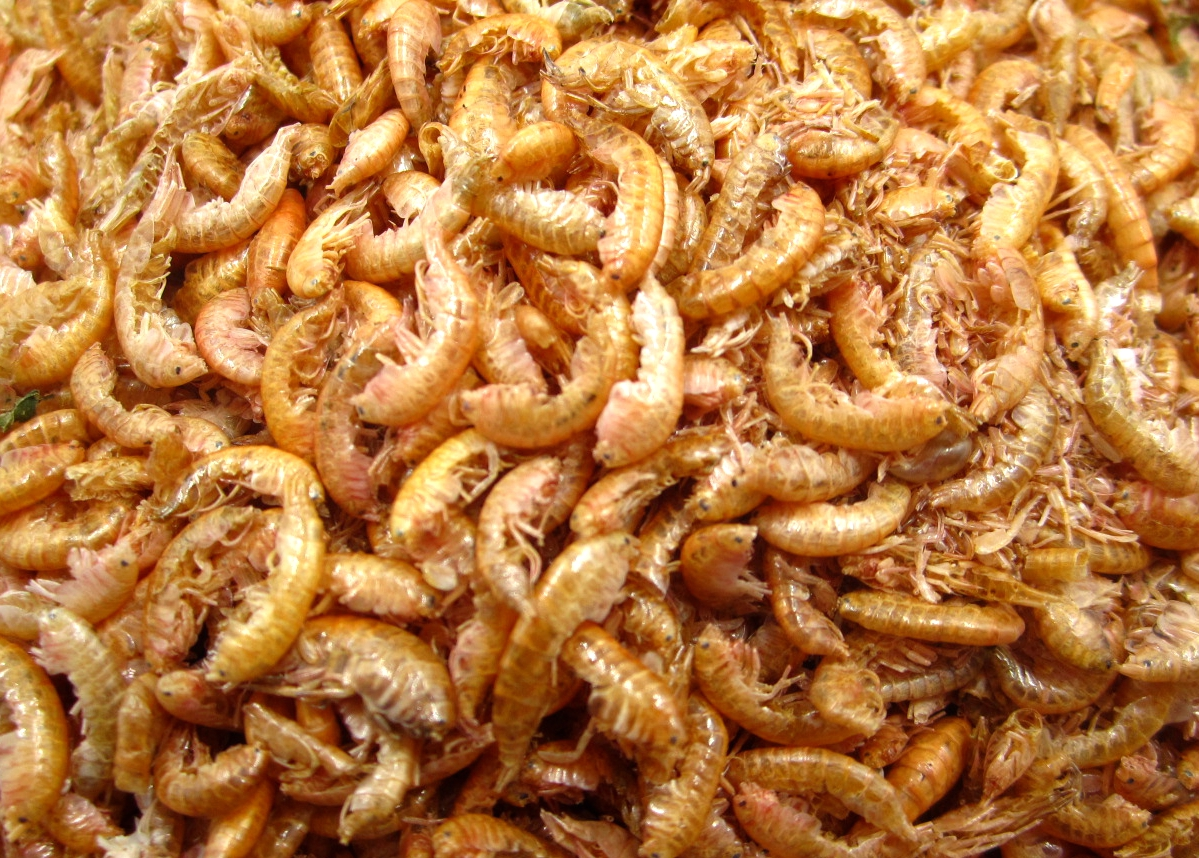 Pet food sun dried gammarus