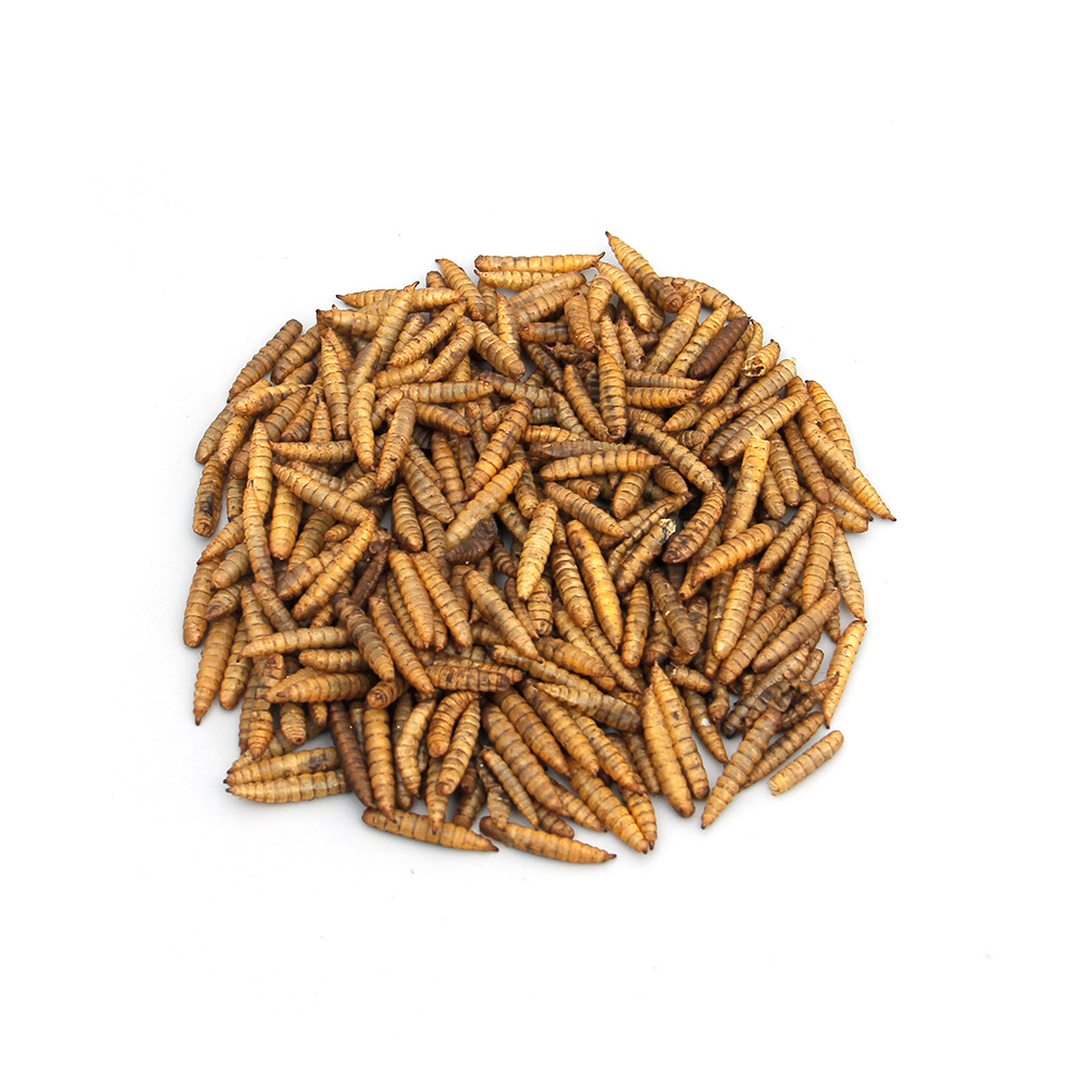 Wild Bird Food Microwave Dried Mealworms For Sale